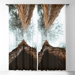 Stand in Awe of the Giant Forest Blackout Curtain