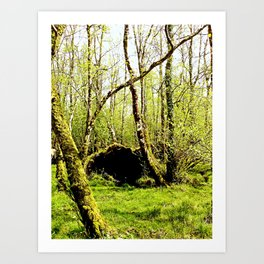 Ireland: nook in the forest Art Print