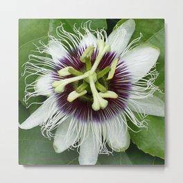 Passiflora Metal Print