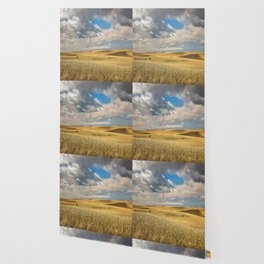 Iowa in November - Golden Corn Field in Autumn Wallpaper