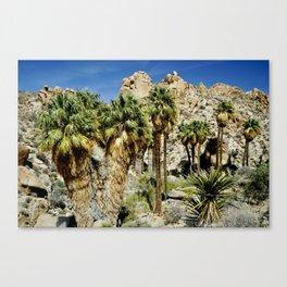 Thousand Palms Canvas Print
