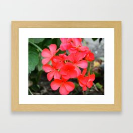 Blossom pattern Framed Art Print