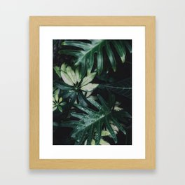 Tropical Garden Plants Houseplants Green Leaves Nature Photography Framed Art Print