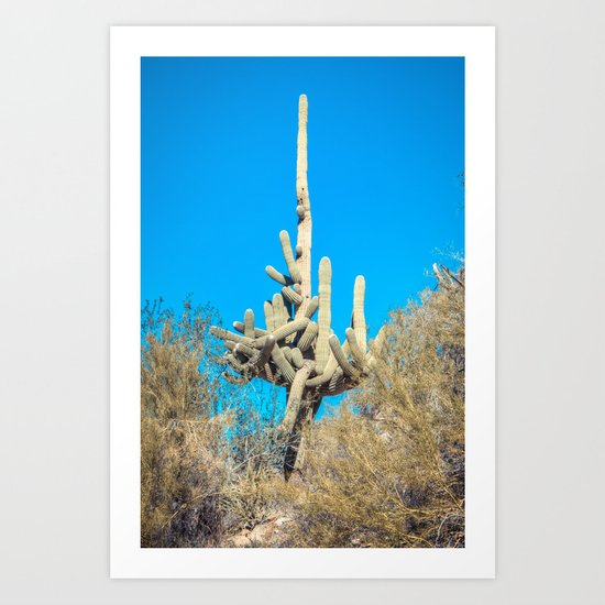 Self Entangled Saguaro  Art Print