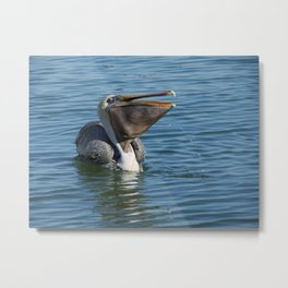 Pelican Lunchtime Metal Print