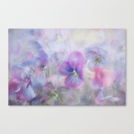 little pansies Canvas Print