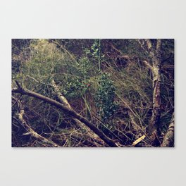 Tangled in the forest Canvas Print