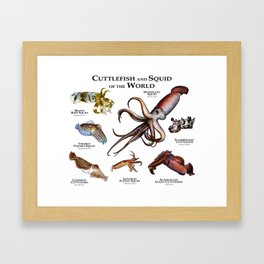 Cuttlefish and Squid of the World Framed Art Print