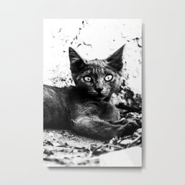 Stray black kitten Metal Print
