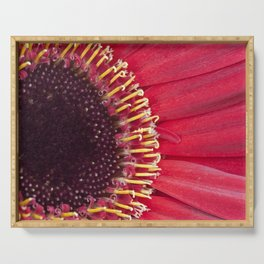 Burst of Colour - Red Gerbera Serving Tray