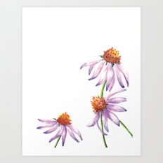 Watercolor Purple Cone Flower Art Print