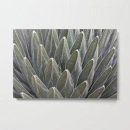 Agave Victoriae-Reginae Cactus Metal Print