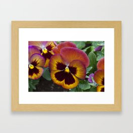 Pansy Painted Framed Art Print