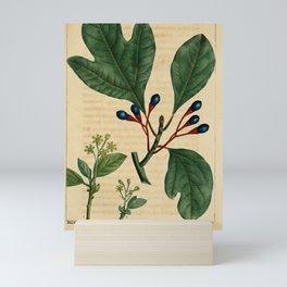 Vintage Print - North American Sylva (1819) - Sassafras Mini Art Print