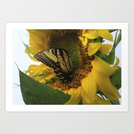 Swallowtail And Sunflower Art Print