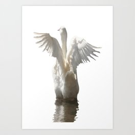 White Duck Flapping Wings on Water Vector Art Print