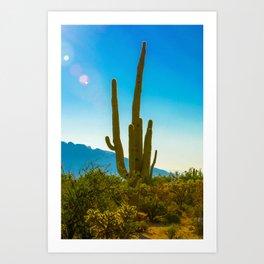 Saguaro Cactus in the Arizona Desert Art Print