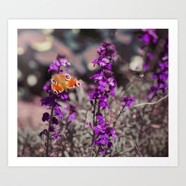 Colourful Visiting Butterfly Art Print