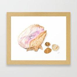 Seashells 01 Framed Art Print