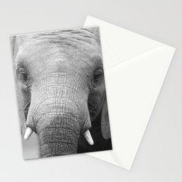 Kavala Orphan Collection (2 - 10) Stationery Cards