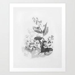 Crepe Myrtles Art Print