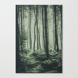 The Light of the Forest IV Canvas Print