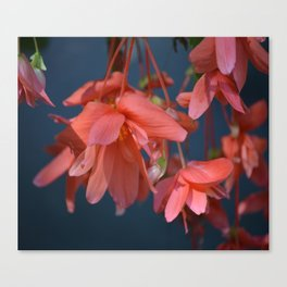 Trailing Red Begonia Canvas Print