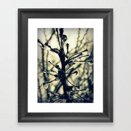 Glistening Framed Art Print