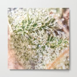Top Shelf Indoor Skywalker OG Kush Close Up Buds Trichomes View Metal Print