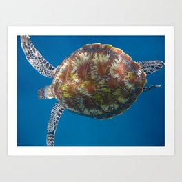 Turtle Tops Art Print