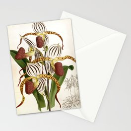 Vintage Plum Lindenia Orchids Stationery Cards