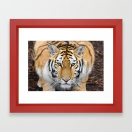 Baby Tiger Framed Art Print