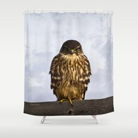 falcon Shower Curtains featuring Merlin Falcon by Photography By MsJudi