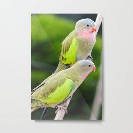 Princess Parrots Metal Print