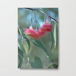 Eucalyptus Silver Princess Blossoms V Metal Print