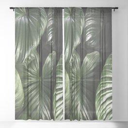 dark green jungle rainforest tropical leaf Sheer Curtain