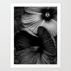 Dramatic Black and White Hibiscus Flowers Macro Art Print