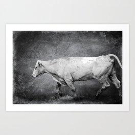 Cattle Rush Art Print