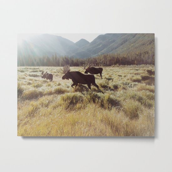 Three Meadow Moose Metal Print