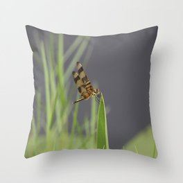 Striped Dragonfly 338 Throw Pillow
