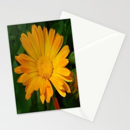 Pale Orange Marigold Flower With Garden Background  Stationery Cards