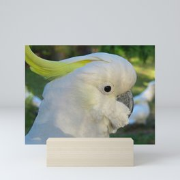 Sulphur Crested Cockatoo Mini Art Print