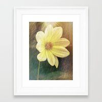 dahlia Framed Art Prints featuring Dahlia by Lynn Bolt