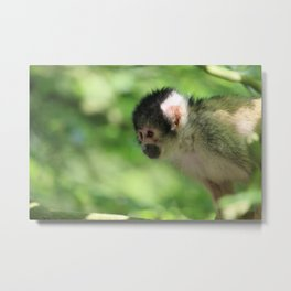 Small Monkey Close Up Metal Print