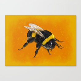 Fuzzy Bumblebee Canvas Print