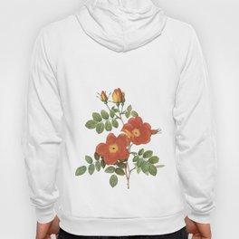 Vintage Roses [11] Hoody