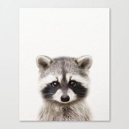 Baby Raccoon, Baby Animals Art Print By Synplus Canvas Print