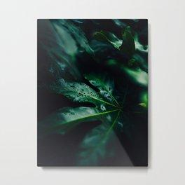 Tropical Monstera Leaves Green Wet Leaves Metal Print