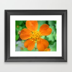 Orange Flower Photography Framed Art Print