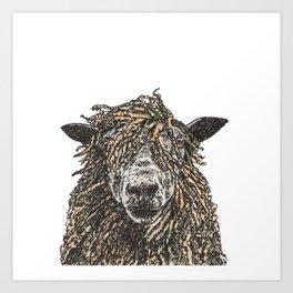 Cotswold Sheep Art Print